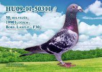 09-11-50311-H_ok