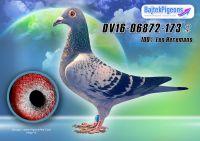 DV16-06872-173-kkt-E---OK