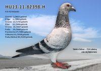 HU13-11-82398-H---OK2