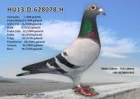 HU13-D-628078-H---OK2