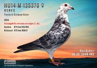 HU14-M-135370-T---OK2