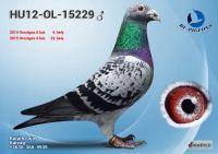 15229---OK_resize