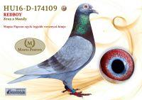 HU16-D-174109-H---OK_resize